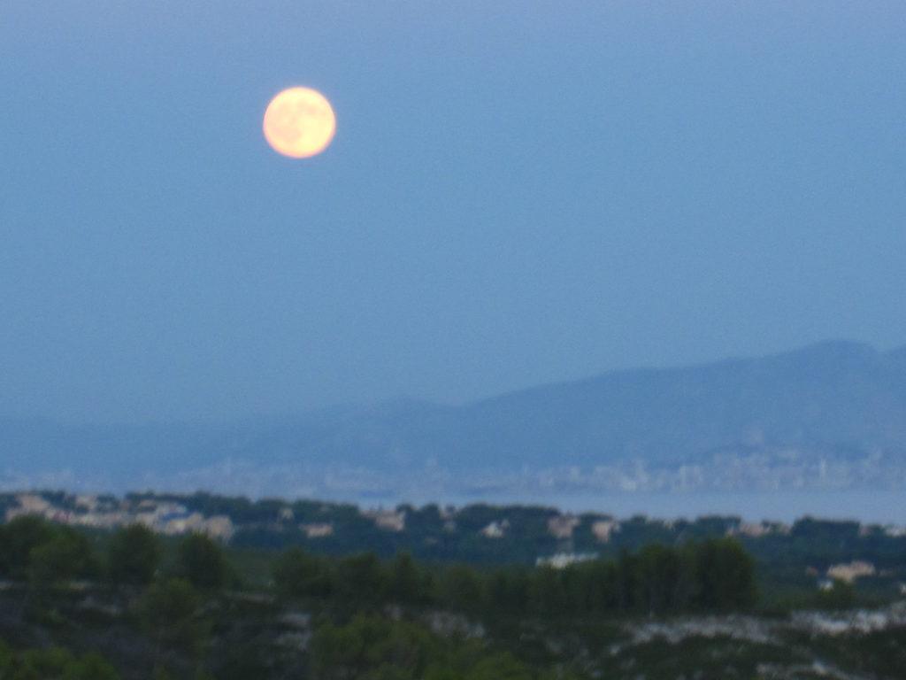 庭から見えた満月