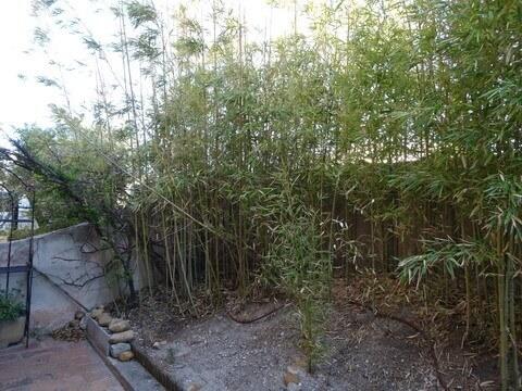 笹がはびこる庭