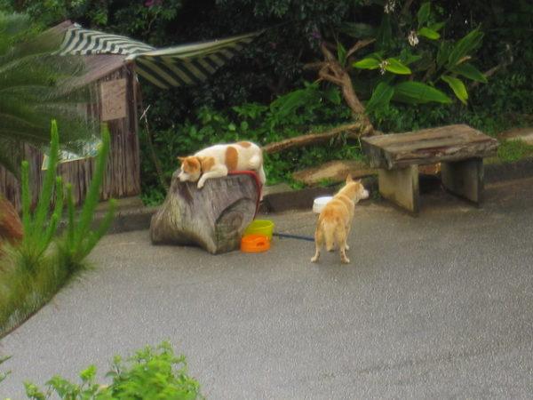ヨロン島ビレッジ 犬