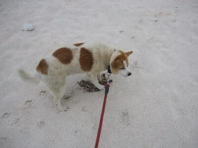 鳥の死骸を見つけた犬