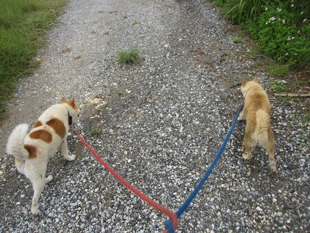 ケンとマーゴと散歩