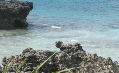 トゥマイビーチのオスの龍