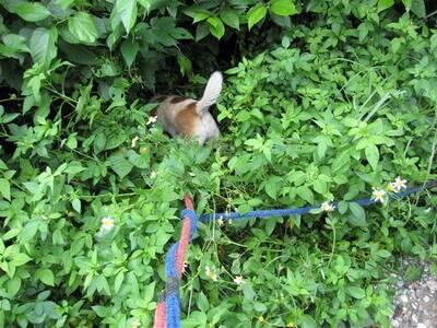 草むらに入るマーゴ(犬)
